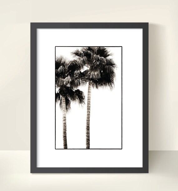 Palm Tree Silhouettes. Woodland. Monochrome. Nature Photography. Black & White Print by OneFrameStories.