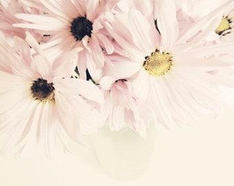 Pink  Daisy Photograph -  Floral Wall Art - Flower Photograph - Nursery Wall Art -  Pastel Daisies - Nature Flower Photography