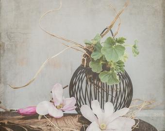 Still life magnolia fine art photography digital image