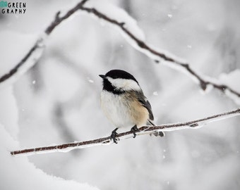 Winter Chickadee on a Snowy Branch Photo /Winter Photography/ Nature Photography /Travel Photography/ Photography Print /Home Decor Wall Art