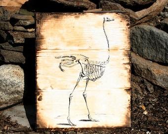 Ostrich Skeleton print