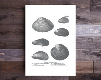 Mussels and Sea Clams Art in Black and White- Beach House Decor Ocean Wall Decor Beach Art Nautical Print Nautical Decor Father's Day Gift
