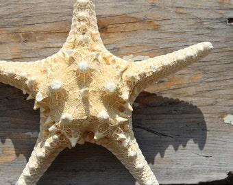 "White Thorny Starfish 8"" to 10"" -  Wedding - Beach Party - Beach Wedding"
