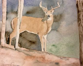 Deer in the headlight