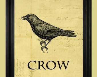 Crow Art Illustration, Vintage Black Crow Drawing, The Word Crow Typography Print  - 8 x 10