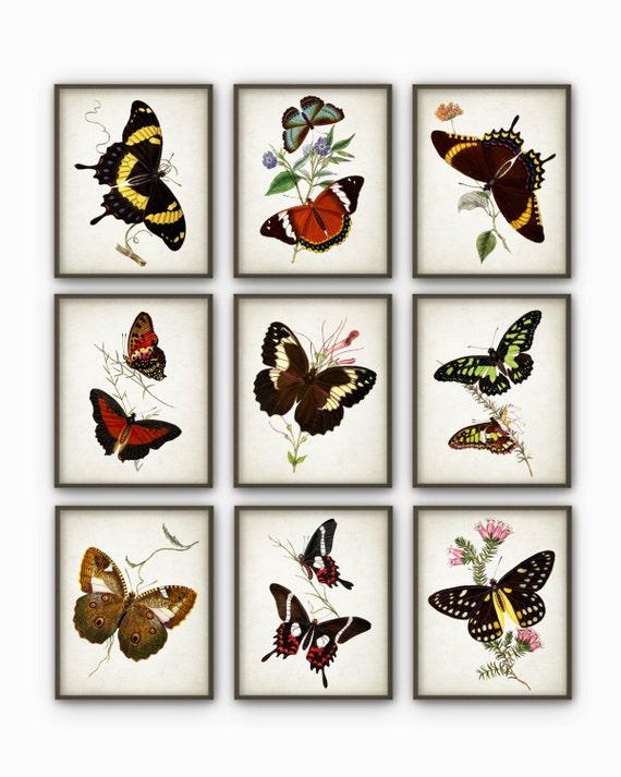Butterflies antique botanical print set of 9 vintage