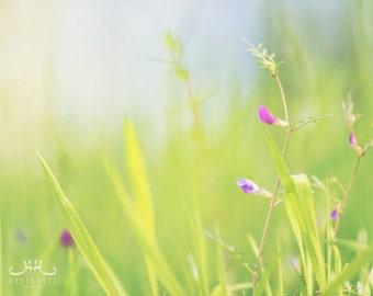 Spring Grass - Photo Print, green grass, fresh morning, botanical art print