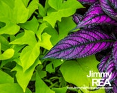 Flower photography, work space print, purple, green, kitchen picture, home decor art, bedroom decor photograph,nature photographs,dramatic