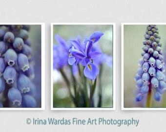 Blue flower photography, 3 floral prints, modern art large wall art set botanical photos, blue sage green nature 3 piece wall decor vertical