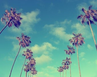 Lofty Palms, Sky, Palm Trees, Clouds, La Jolla, San Diego, California