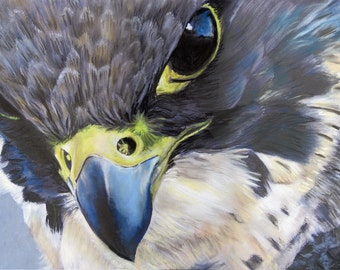 Peregrine Falcon - Limited Edition artist Mounted print of a beautiful Peregrine Falcon