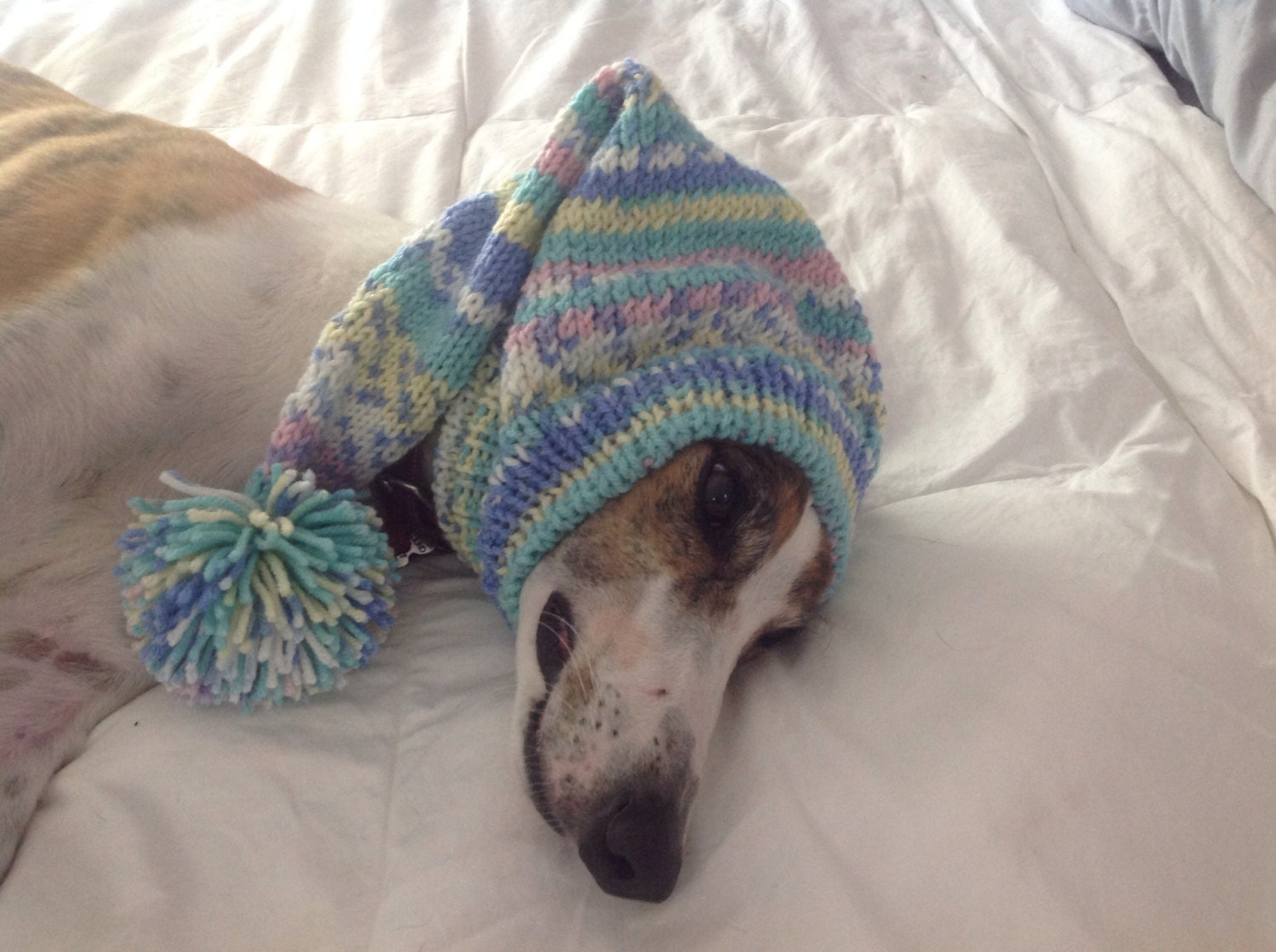 Pointed hat with snood for greyhound fair isle pattern baby shades gallery photo gallery photo gallery photo bankloansurffo Images
