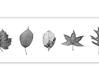 "Leaf Photography, Nature Art, - ""The Leaf Compendium"""