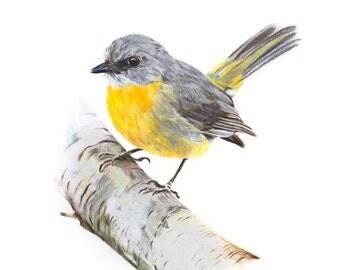 Robin Print - Bird Art - Bird Print