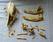 Natural Monarch Raw Dog Food