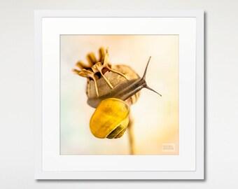 Snail Square Print, Framed Photography, Nature Art, Yellow Print Decor, Wall Art Print