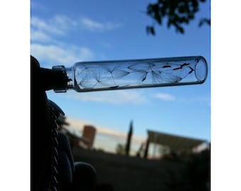 Real Dandelions inside Glass Cork Vial Chain Necklace