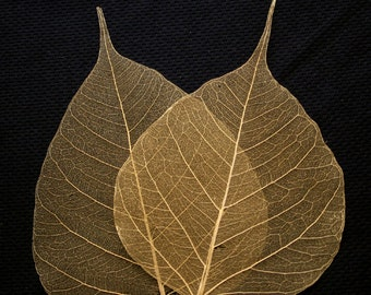 Gold Bodhi Skeleton Leaves