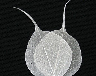 Ivory bodhi skeleton leaves