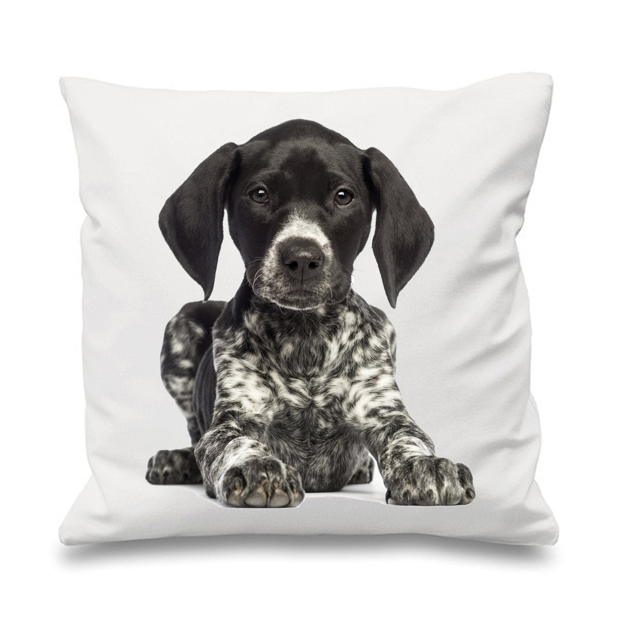 german short haired pointer 18 x 18 filled sofa