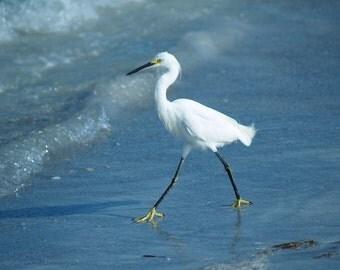 Shore Birds # 3 - Snowy Egret