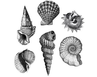 Vintage Shells Temporary Tattoos - She Sells Seashells!