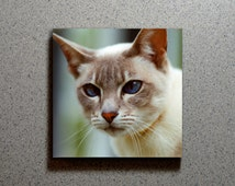 Blue Eyed Cat Ceramic Coaster Tile Wall Drink, Close Up Siamese Kitten Tan Brown White Cats Blue Eyes Kitty Animal Pet Cute Adorable