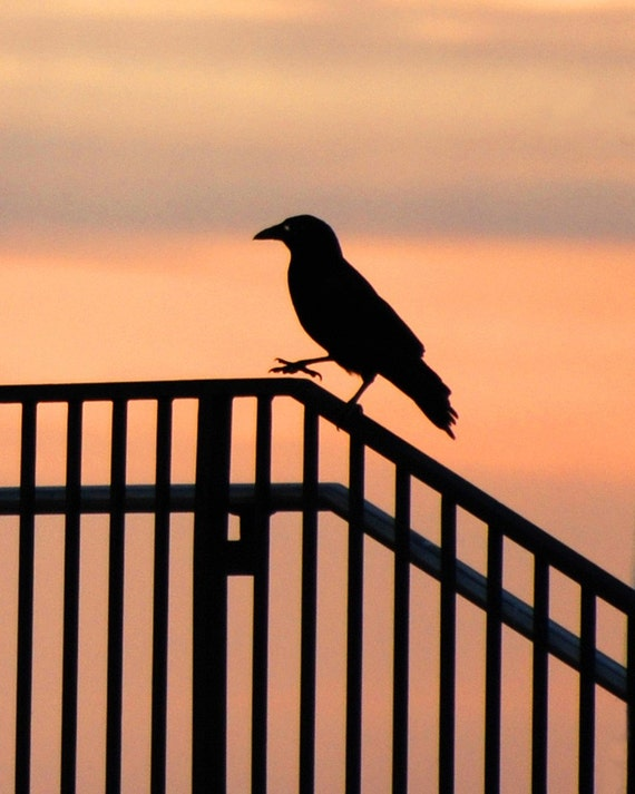 Bird On Fence Silhouette Fine Art Photography Wall Photo
