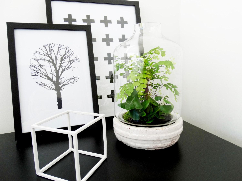 Glass terrarium indoor garden miniature by thebirdwhistlehome for Indoor gardening glasses