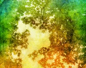 """Summer Leaves Color Tree Art Limited Edition Altered Photograph Matted Print """"How Summer Feels"""" by Kat Sloma"""
