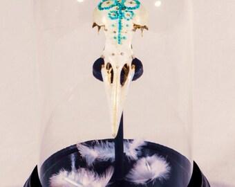 Fairy Rook Skull