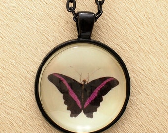 Butterfly 21c - Scientific Illustration - Pendant Necklace - Science Jewelry