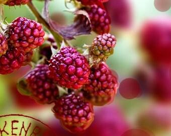 Photography raspberries in my garden, nature Picture, Raspberries, Berries, Wild Fruits, generous nature, vivid colors.