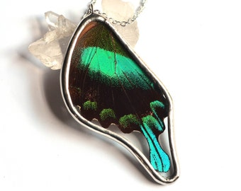 Real Butterfly Wing Necklace Papilio blumei Swallowtail Hind Wing