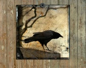 Crow Art Decor, Eerie Crow Photograph, Gothic Art, Pro Print, American Crow, Raven Collage Aged Style Art  -  Crow Caws