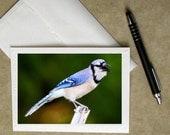 Blue Jay greeting card, blue jay card, bird stationary, bird greeting card, blue jay photo notecard, bird greeting card, bird photo card