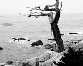 Dark & Twisty - Look Out (black and white nature photography print, creepy spooky snarly tree trunk branches rocks ocean wall art decor)