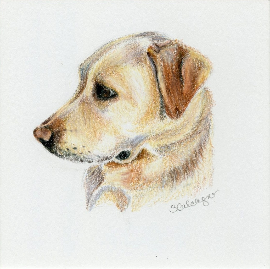 Lab Dog Drawing Easy