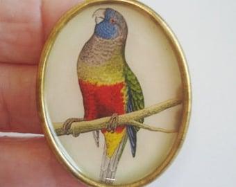 Parrot Bird Brooch KL Design