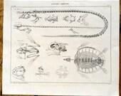 1843 ANIMAL SKELETON ANATOMY print original antique aquatic animal lithograph - lizard frog turtle reptile amphibian