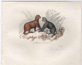 1860 sloth & aye aye print original antique hand colored animal engraving - buffon cuvier natural history