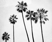 "Black And White Palm Tree Photography, Gray White, Palm Tree Wall Art, Nature Photography, Gray Wall Decor ""6 Palms"""