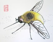 ACEO Fuzzy Bee Fly - Insect Art Archival Print