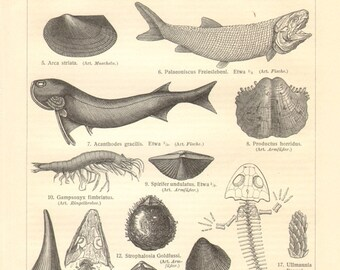 1908 Fossils from the Paleozoic Era, Permian Geologic Period, Fishes, Bivalves, Bryozoans, Brachiopods, Crustacean, Amphibians Vintage Print