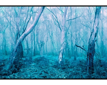 nature photography, landscape, forest, teal, robins egg blue, pink, dreamy, nursery, forest, magenta, wall art
