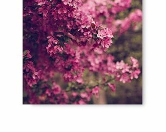 Pink Flower Photography, Flower Wall art, Flower Photo, pink flower decor, floral print, nature print, fine art photography, wall decor