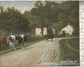 Cows in Road in the Catskill Mountains New York Vintage Undivided Back Postcard UDBPC Rural Farmland Scene