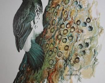 Vintage Wildlife Bird Print of a California Woodpecker by American Artist Bob Hines