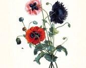 Redoute Series No.1 Anemone - Botanical Print - Giclee Canvas Art Print - Antique Botanical - Wall Art -Poster - Print - Home Decor