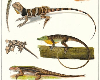 Antique Bookplate Reptiles Lizards Gecko Skink Salamander 1900s Nature
